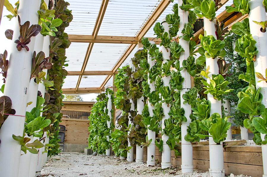 hydroponicsforweb